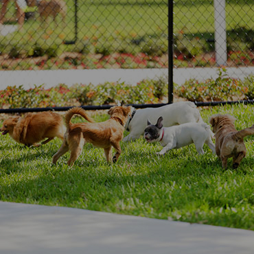 Large Dog Park at Casper Village Apartments